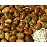 Bean Fava Sweet Lorane D11203A (Brown) 50 Organic Seeds by David's Garden Seeds