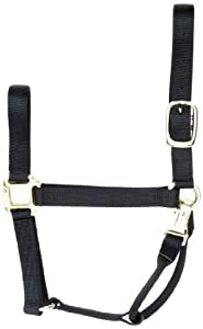 Accent 1-Inch wide Premium Halter for Yearlings, 500 to 800-Pound, Black