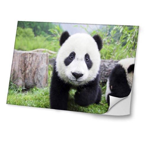 animales-salvajes-10037-diseno-mejor-pegatina-de-vinilo-protector-con-efecto-cuero-extraible-adhesiv