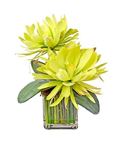 Creative Displays Lotus Blossom Water Cube, Green Multi