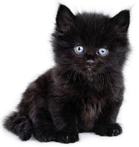 Ean 3700868767066 sku004147 autocollant sticker voiture moto animal animaux bebe chat chaton - Photo de bebe chat ...
