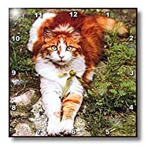 Cats - Orange Cat - Wall Clocks
