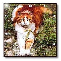 Cats - Orange Cat - Wall Clocks