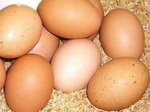 こだわりの平飼い有精卵 10個 ※運動たっぷりの平飼い鶏から生まれた元気な卵です!