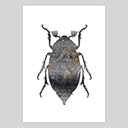 Art Watercolor Print Beetle, 8.5 x 11 inches