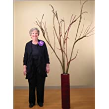Fantail Willow 6-7.5 Feet Tall. Giant Bunch of 7-8 Branches