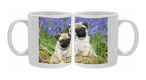 Photo Mug Of Jd-21638 Dog. Pug Puppies Standing Together In Bluebells From Ardea Wildlife Pets front-900538