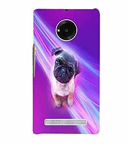 PrintVisa Animal Cute Pug 3D Hard Polycarbonate Designer Back Case Cover for YU Yuphoria