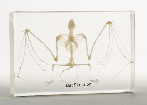 Bat Skeleton Acrylic Block by Nature-Watch
