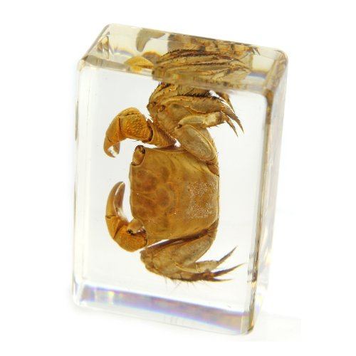 """Crab Paperweight (1.8x1.1x0.8"""")"""