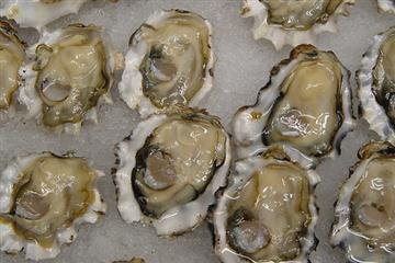 Cocktail Oysters in the Shell