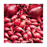 500g PIROSKE ONION SETS - (120 Pack) - Red Onion Bulbs - AVAILABLE NOW