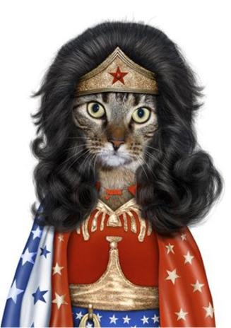 Wonder Woman Tabby Cat Impersonated Pets Rock