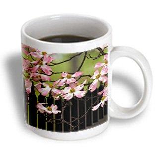 Danita Delimont - Trees - Dogwood Tree, Audubon Park, Louisville, Kentucky, Usa - Us18 Aje0531 - Adam Jones - 15Oz Mug (Mug_144435_2)