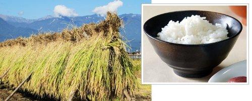 埼玉県産 白米 無洗米 10kg (5kg×2) お米マイスター (未検査米) 平成25年産