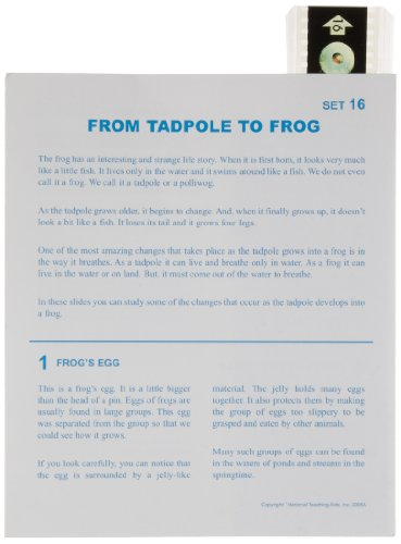 American Educational Microslide from Tadpole to Frog Lesson Plan Set