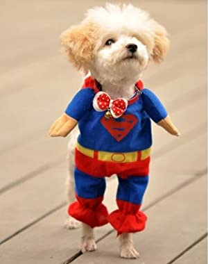 ワンちゃんがスーパーマンに変身