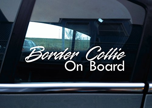 border-collie-dog-on-board-in-vinile-motivo-auto