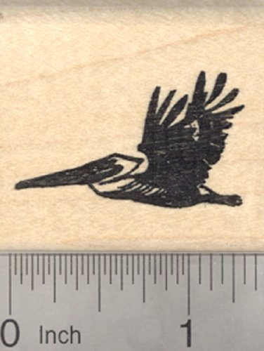 Pelican Rubber Stamp, South American Brown or Peruvian