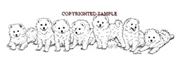 American Eskimo - Puppies in a Row by Cindy Farmer