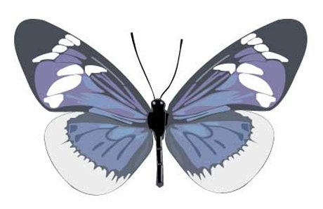 Animal Wall Decals - Blue, White Butterfly - 36 Inch Removable Graphic front-1065827