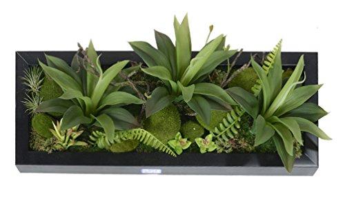 mur vegetal exterieur les bons plans de micromonde. Black Bedroom Furniture Sets. Home Design Ideas