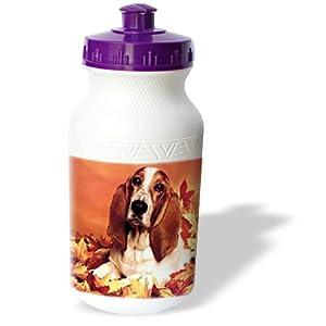 Dogs Basset Hound - Basset Hound - Water Bottles