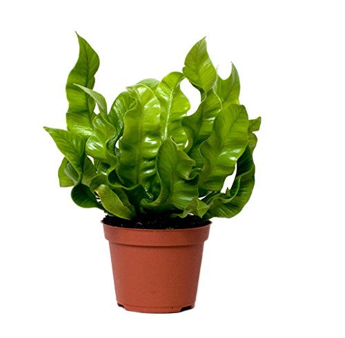 plug-plants-mix-mini-plants-ferns-palms-spider-plant-and-money-maker-easy-care-collection-houseplant
