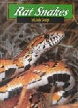 Image for Rat Snakes