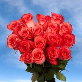 Amazon.com : Bulk Bright Coral Roses | 200 High & Blooming Roses