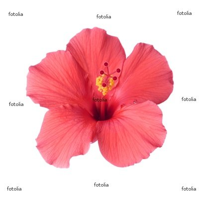 Wallmonkeys Peel and Stick Wall Graphic - Tropical Hibiscus - 18
