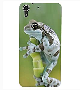 ColourCraft Funny Frog Design Back Case Cover for HTC DESIRE 626