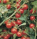 Cherry Tomato Matt's Wild D732A (Red) 25 Heirloom Seeds by David's Garden Seeds