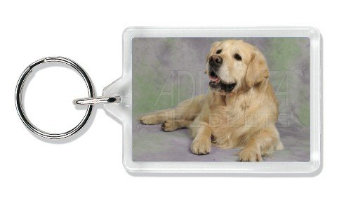 Gold Golden Retriever Photo Keyring Stocking Filler, Ref:AD-GR2K