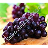 Mixed 50 Seeds/ Bag Grape Fruit Seed , XINJIANG Tulufan Grape Tree Seedlings, Potted Bonsai Plant Kyoho Grape...