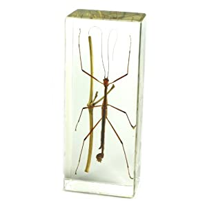 "Stick Bug Paperweight (4.4x1.6x1.1"")"