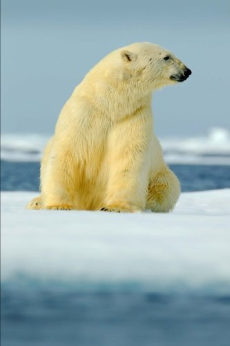 polar-bear-does-this-snow-make-my-fur-look-yellow-journal-150-page-lined-notebook-diary
