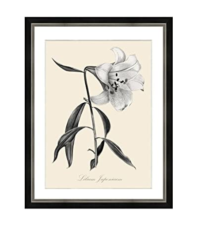 Art Source Cream Botanical Print IV, Multi