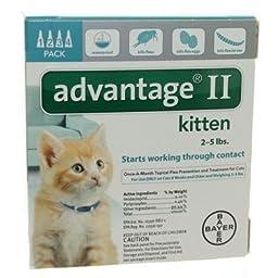 Bayer Advantage 2 Kitten 4-Pack 2-5# Turquiose