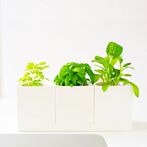 set-of-3-modular-selfwatering-modernistic-square-white-planter-pots-with-tray-for-small-herb-desktop