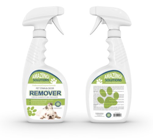 can professional carpet cleaners remove pet urine best pet stain remover and odor eliminator carpet cleaner