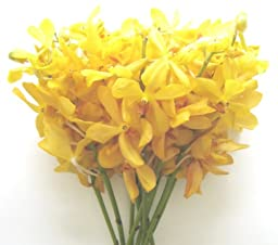 Fresh Flowers - Yellow Mokara Orchids