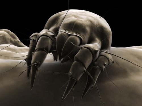 A Crash Course on How to Get Rid of Dust Mites