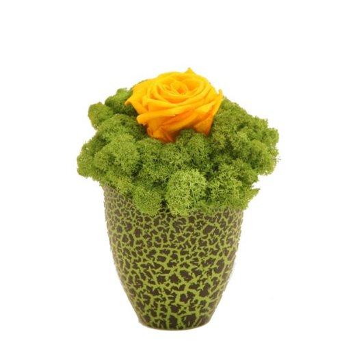Rosemarie-Schulz-Kleines-Blumengesteck-2-3-Jahre-haltbar-in-grner-Glasvase-mit-gelber-Rose-und-Moos-Abmessungen-12x20cm