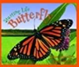 Starting Life : Butterfly