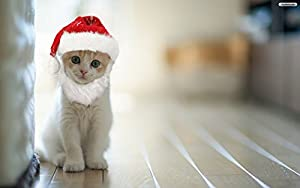 Prymal Santa Dog Cat Costume. This Pet Costume Turns Your Cat or Small Dog Into Santa for the Holidays!