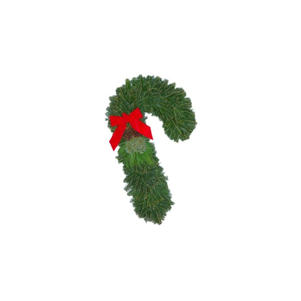 The Christmas Tree Company 24 Fresh Christmas Candy Cane Fraser Fir Wreath with No swing Wreath Hanger