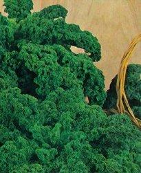"""Kale """"Dwarf Siberian Improved"""" 1,500 Seeds"""