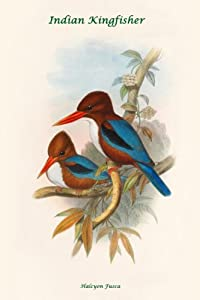 Canvas Print, Halcyon Fusca - Indian Kingfisher - 20x30