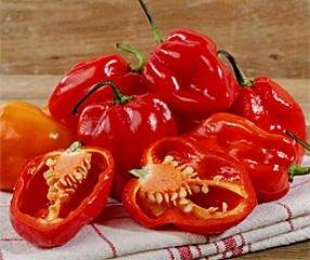 bobby-seeds-chili-peperonisamen-numex-suave-rot-portion